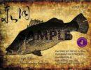 釣り好きの方必見!世界初、デザイン魚拓の魅力を紹介!!